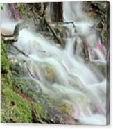 Fresh Spring Water Nature Detail Canvas Print