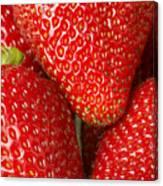 Fresh Strawberries Canvas Print
