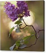 Fresh Violet Lilac Flowers Canvas Print