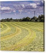Freshly Mown Hay  Canvas Print