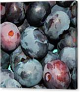 Freshly Picked Blueberries Canvas Print