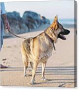 German Shepherd With Man On The Beach Canvas Print