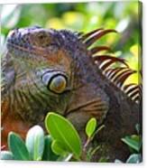 Friendly Iguana Canvas Print