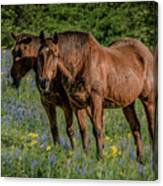 Friends In The Bluebonnets Canvas Print