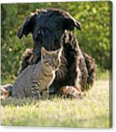 Friendships In The Animal World Is Possible Canvas Print