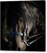 Friesian Horse Portrait Dark Canvas Print