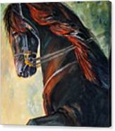 Friesian Sunset Canvas Print