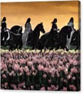 Friesians At Sunset Canvas Print