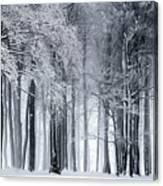Frigid Forest Canvas Print