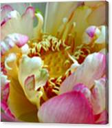 Frilly Lotus Canvas Print