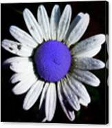 Fringe - Blue Flower Canvas Print