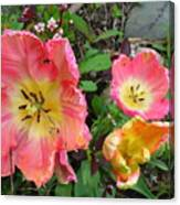 Fringed Tulips Canvas Print