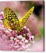 Fritillary Butterfly On Flowers Canvas Print