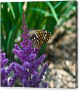 Fritllary Butterfly On Astilbe Canvas Print