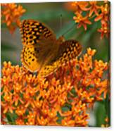 Frittalary And Milkweed Canvas Print