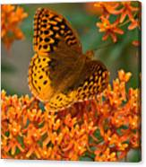 Frittalary Milkweed And Life Canvas Print