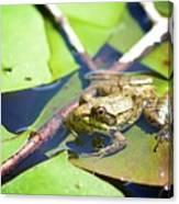 Frog 3 Canvas Print