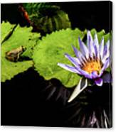 Frog And Lily Reflected Canvas Print