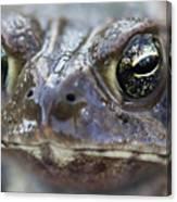 Frog Eyed Canvas Print