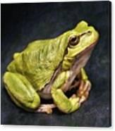 Frog - Id 16236-105016-7750 Canvas Print
