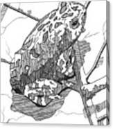 Oak Toad On A Leaf Canvas Print