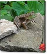 Frog On A Rock Canvas Print