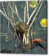 Frog On A Stick Canvas Print