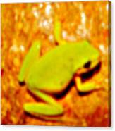 Frog On The Wall Canvas Print