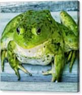 Frog Portrait Canvas Print