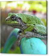 Frog Watering Plants Canvas Print
