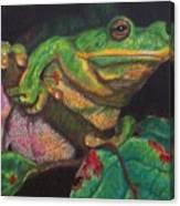 Froggie Canvas Print