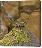 Froggy On A Hill Canvas Print