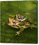 Frogs In Love Canvas Print