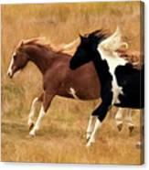 Frolicking Horses Canvas Print