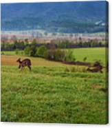 Frolicking On A Spring Morning Canvas Print