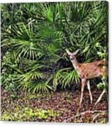 From The Palmetto Bushes Canvas Print