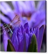 From The Water Lily Garden Canvas Print
