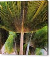 Frond Canvas Print