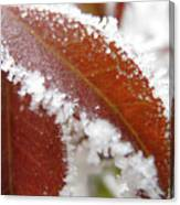 Frost And Leaf Canvas Print