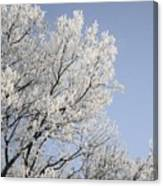 Frost Cover Maple Trees Canvas Print