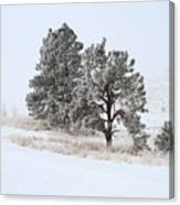 Frost . Fog And Twenty Below ... Montana Art Photo Canvas Print