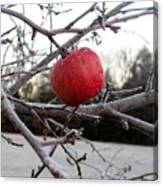 Frosted Apple Canvas Print