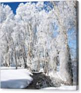 Frosted Cottonwoods Canvas Print
