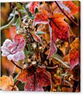 Frosted Fall Canvas Print