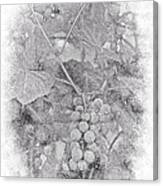 Frosted Grapes Vignette Canvas Print