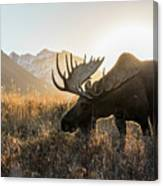 Frosted Grass For Breakfast Canvas Print