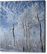 Frosted Hilltop Quakies Canvas Print