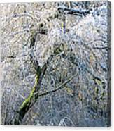 Frosted Limbs Canvas Print