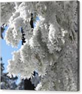 Frosted Pine Needles Canvas Print