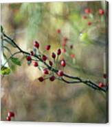 Frosted Red Berries And Green Leaves  Canvas Print